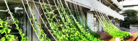 muros verdes, jardines verticales