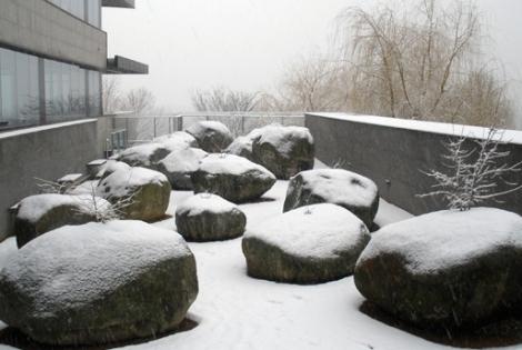 El jardín que crece en piedras